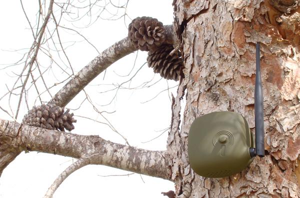 החיישן כשהוא מותקן על עץ. צילום: Eli Gutierrez studio / Tato Baeza