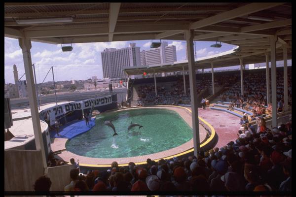 מראה כללי של הדולפינריום בתל אביב 1981. צילום: SA