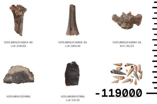 הצדפים מימין מתוארכים לשנת 119,000-  [צילום מסך]