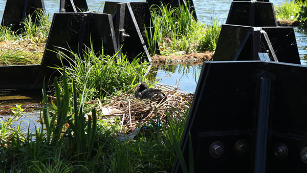 מחסה טבעי לחיות רבות. צילום: Recycled Island Foundation