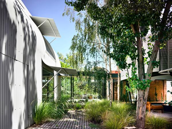 מרחב המחייה והשורשים של העצים נשמר. תכנון: Austin Maynard Architects, צילום: Derek Swalwell