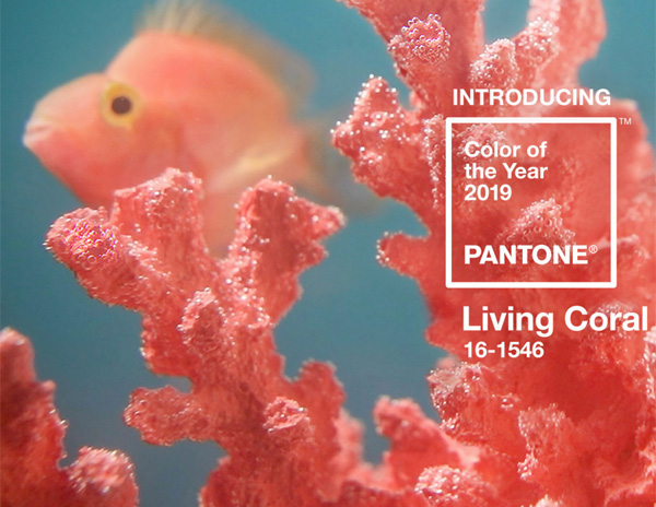 השראה מהעולם התת מימי. תמונה: צילום מסך