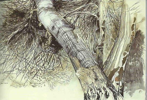 רישום עץ, טכניקה גרפיט ועפרונות רקוורל, צילום: רן ארדה