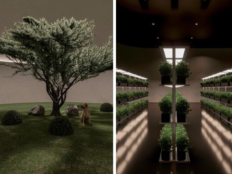 גינה לגידול ירקות. מימין, גינת מותאמת לטיול עם כלב. אדריכלות, הדמיה וקונספט :סטודיו מקנו